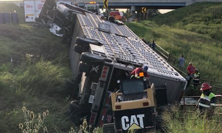 Overturned Cattle Trailer