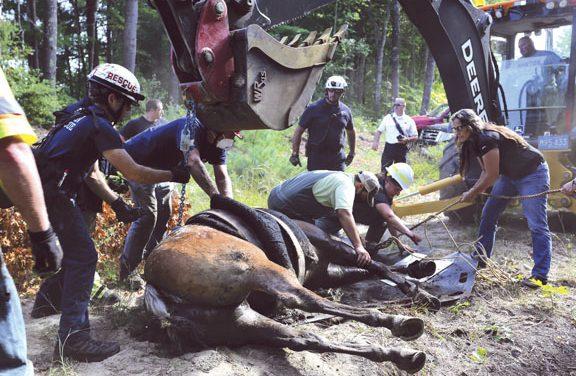 Horse Rescued in Hanson