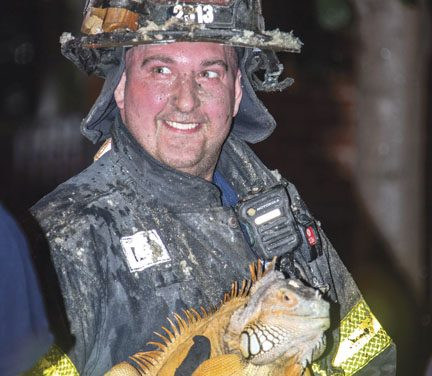 Nothing Like Finding a Lizard at a Fire!