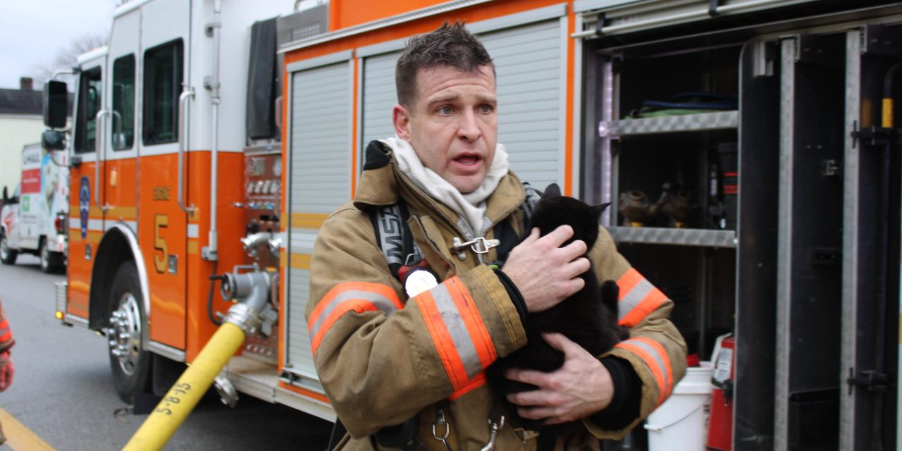 MULTIPLE CATS RESCUED FROM WHEELING (WV) BLAZE