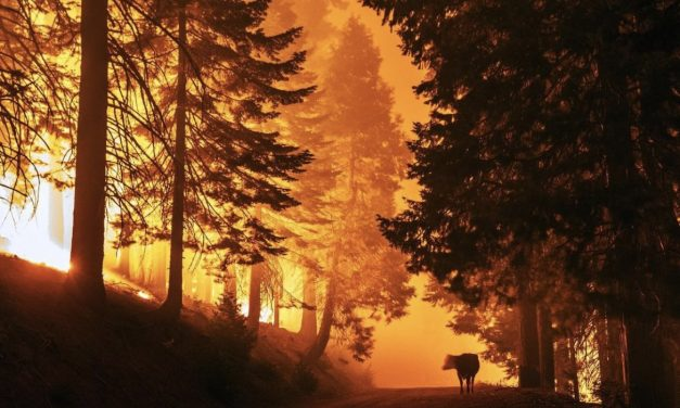 EVACUATIONS ORDERED AS FRENCH FIRE GROWS IN KERN COUNTY (CA)